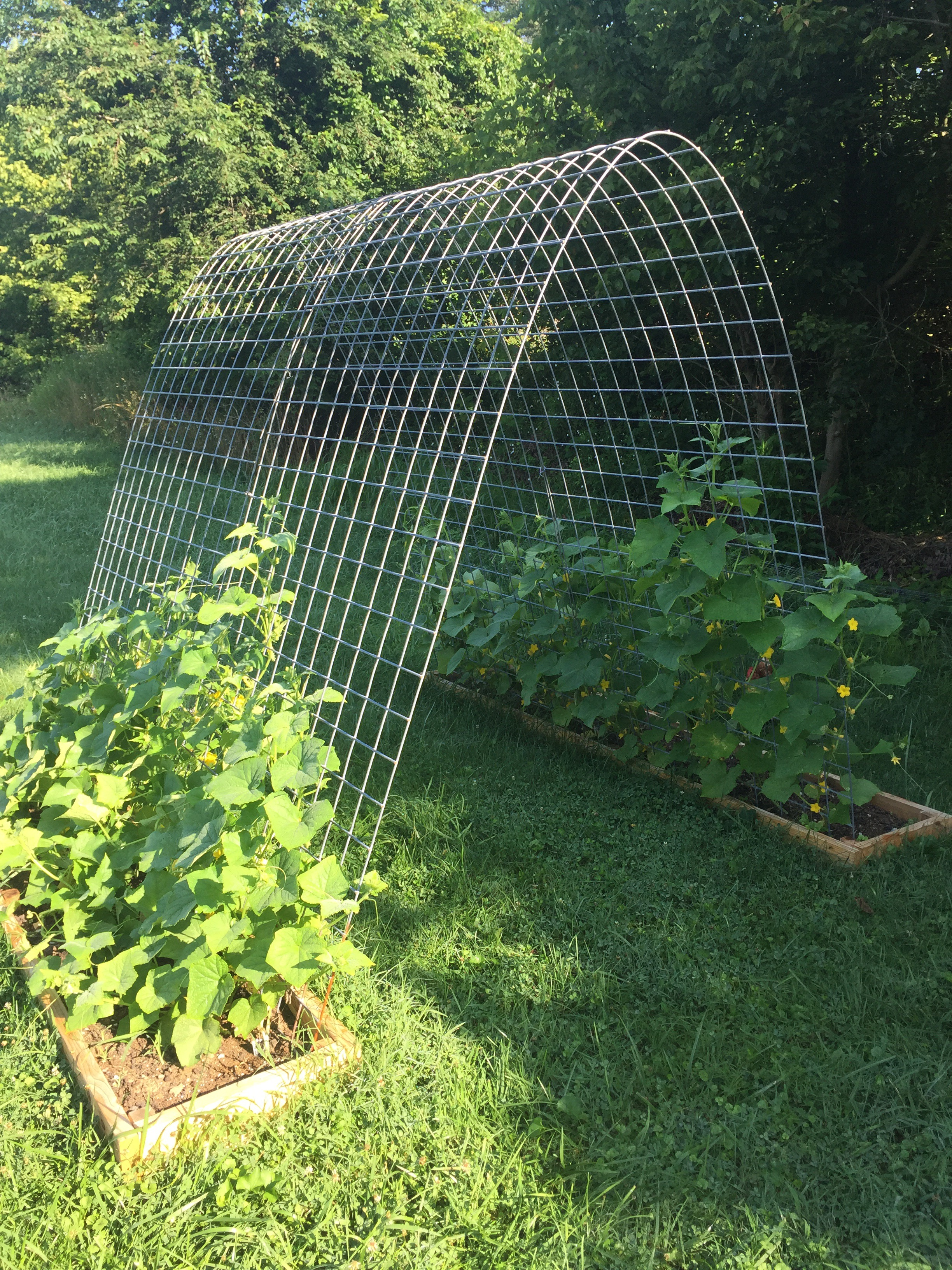 Cucumber Trellis Phillips Farm Batavia Llc